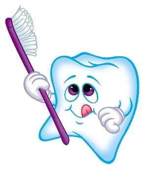 dent prémolaire de bébé