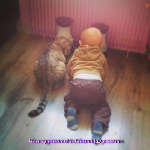 Pépin et son chat2