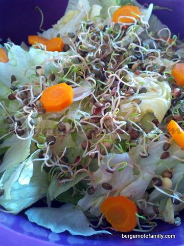 salade lentilles germées