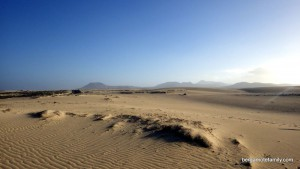canaries - bergamote family - dunes de sable