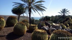 canaries - bergamote family - oasis park - cactus