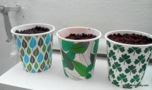 jardinage herbes - bergamot family