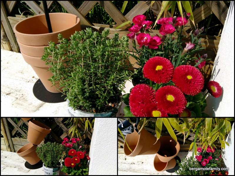 jardinage botanic - bergamote family (1)