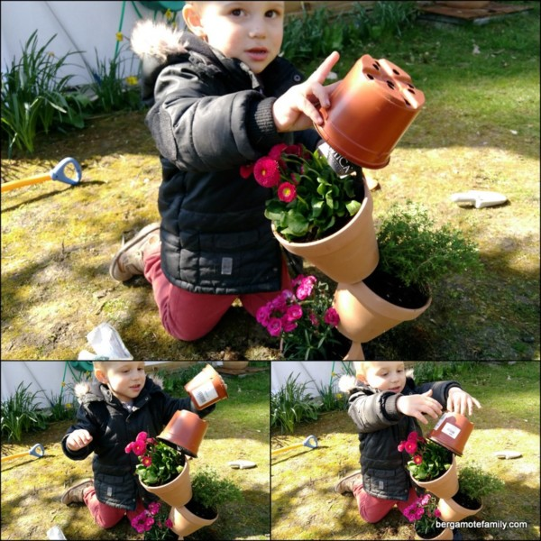 jardinage botanic - jardin - bergamote family (3)