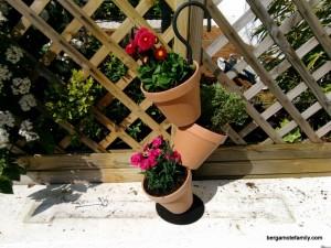 jardinage botanic - bergamote family (5)