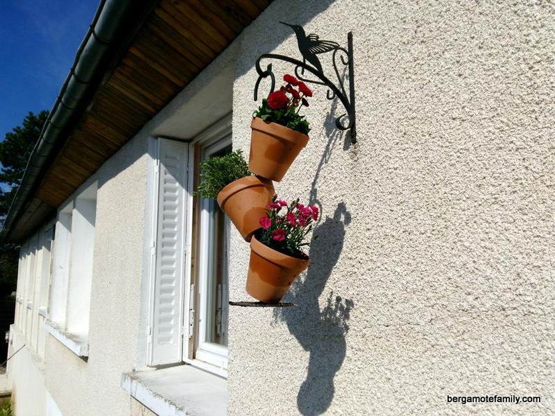 jardinage botanic - bergamote family (6)