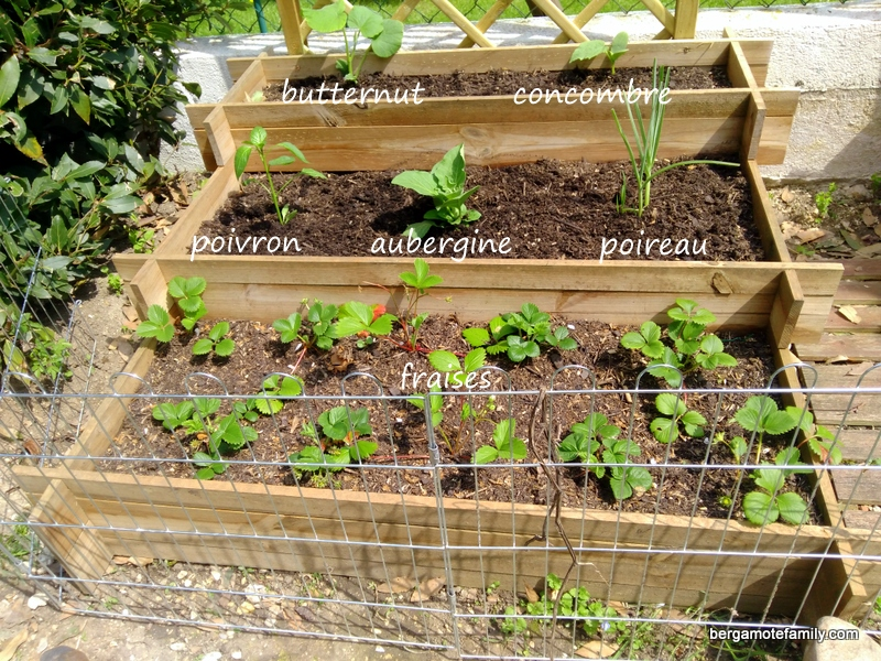 au jardin nos carr s potagers bergamote family. Black Bedroom Furniture Sets. Home Design Ideas