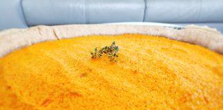 Recette pour enfants : tarte à la carotte et cumin